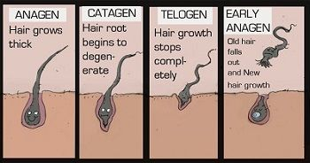 Stress effects the hair growth cycle.